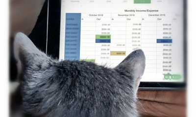 cat with spreadsheet